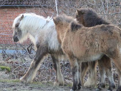 """Maible als """"Yeti-Fohlen"""" mit ihren Kindergartenfreundinnen"""