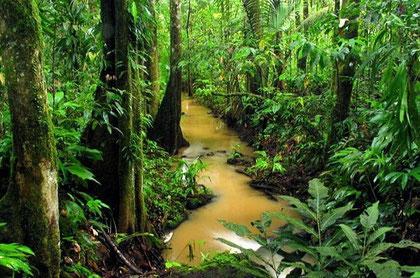 Forêts tropicale humide. Sources: Pascal Dumas.