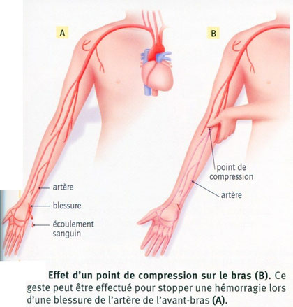 Effets d'une compression au niveau du bras lors d'une hémorragie. Source: SVT, BELIN, 2009, p99.