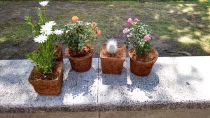 macetas de fibra de coco, macetas, coco, jardinería, macetones, hortalizas, verticales, jardin,