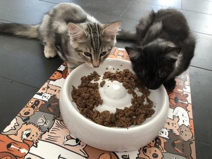 Keramik Fressnapf für Katzen von Lucky Kitta