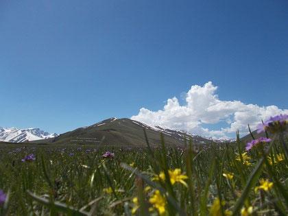 写真はキルギスで野グソ中に撮った一枚。