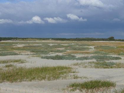 Baie de Somme, marée, sortie, guide, oiseaux, plantes, Le Crotoy, Quend, Saint Quentin en Tourmont, Anse Bidard, Côte Picarde