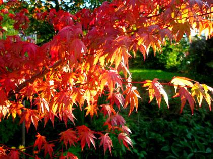 """Herbstwand""[autumnwall]"