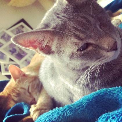 Piccolino & Grizoulis leben mittlerweile zusammen mit 8 anderen Katzen