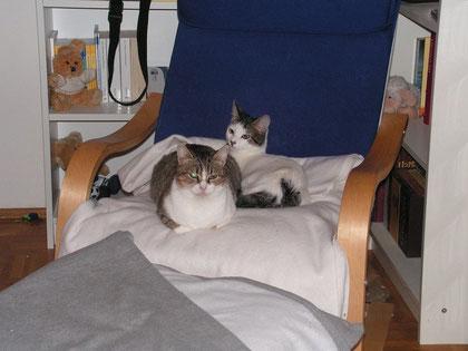 Purl und Dastan durften zu Petra nach München.