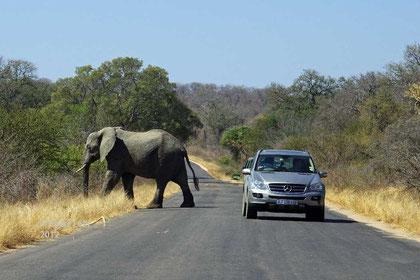 Elefant und Auto