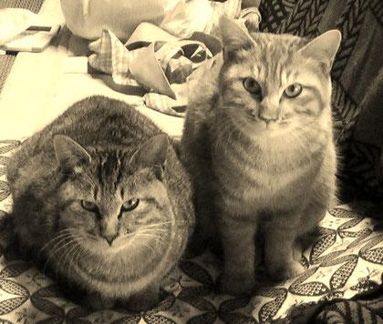 おれたち元気まんまんのニャンコ猫も待ってるぜ!!