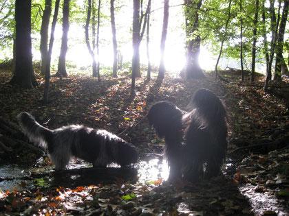 Herbstimpressionen mit Oskar und Amie