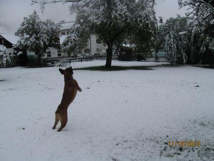 Benny im ersten Schnee