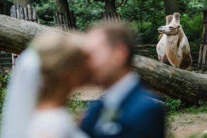 Hochzeitsfotograf Ruhrgebiet NRW. Hochzeit Bilder Zoom Erlebniswelt.