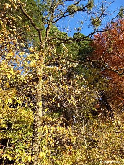 11.11.2018 - Im Baindter Wald