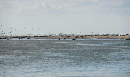 Gîte 4   personnes «   Classé 4 * Meublé du Tourisme »  chambre d'hôtes  studio 2 personnes entre mer et foret quend plage les pins près de Fort mahon Belle Dune entre baie de somme  baie d'authie  à 5 mm  bord de mer plage et des écoles de char à voile ,