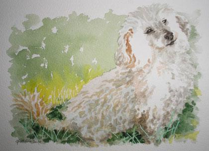aquarelle d'un caniche blanc