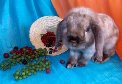 кролики питомника Весна