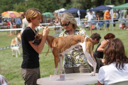 Ausstellung Windhunde Osagard 2009