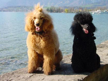 Monty und Goliath