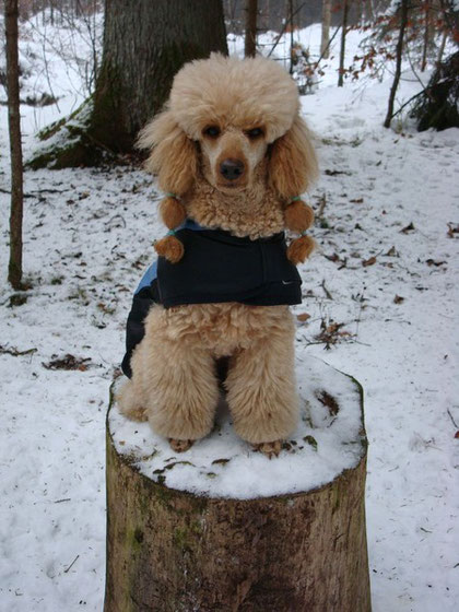 Winter am Thunersee