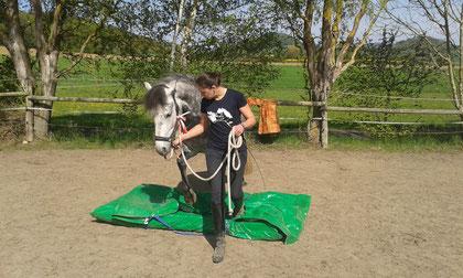 Alternative zum Reiten, beschäftigt und trainiert die Psyche des Pferdes und stärkt Pferd-Mensch-Beziehung