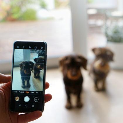 Hundefotos mit dem Smartphone