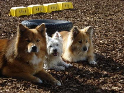 Mikko, Bobby und Tuvra