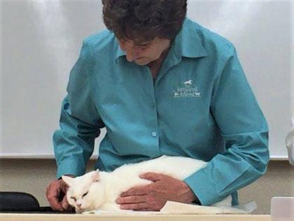 動物の心の動きと変化が体の各部位に表れるのを観察します。