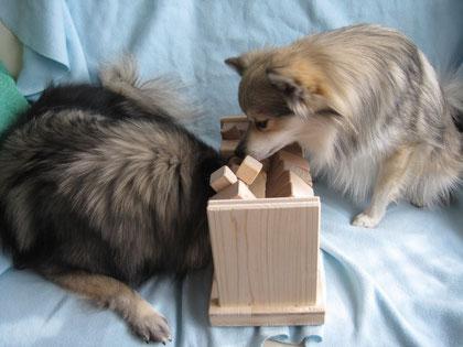 Intelligenz-Spielzeug für Hunde