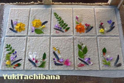 夢狂さんが採取した植物で制作 立花雪YukiTachibana