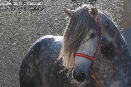 Pferdeshooting, Pferdefotografie, Oberösterreich, Eva Richter, Freude schenken, Spaß