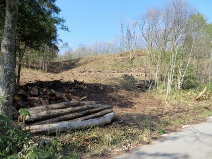 この伐採が環境に今後どう影響するか。