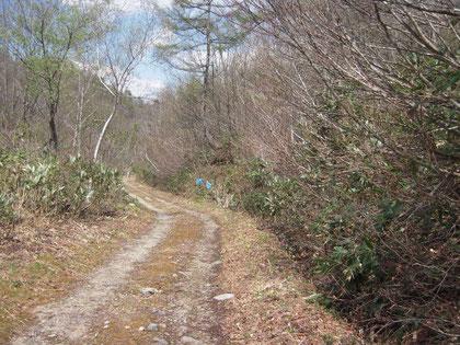 林道脇のショウジョウバカマで吸蜜する個体が多かった。