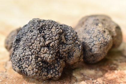 Qualitätszertifizierung für den schwarzen Piceno-Trüffel in Italien