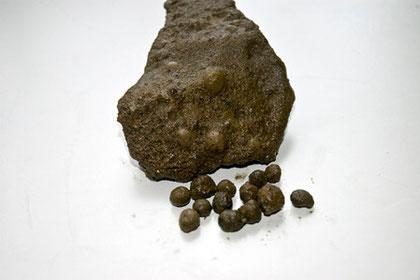 雨の化石(火山豆化石)。この時の噴煙に雨が降り水滴についた噴煙が化石となったもの。この地域ではあちこちで見られる。