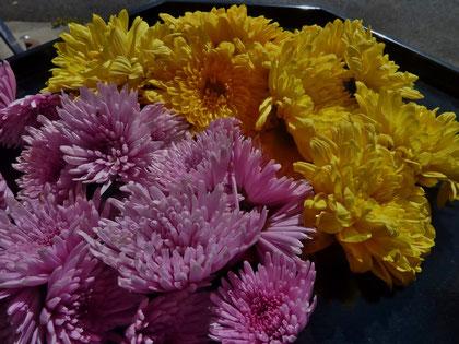 苦みと香り、ビタミンも豊富で抗がん作用も期待されている菊