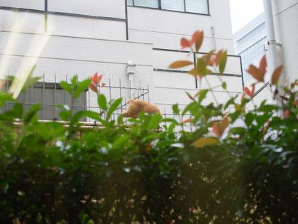 K YOGA STUDIOの窓の外