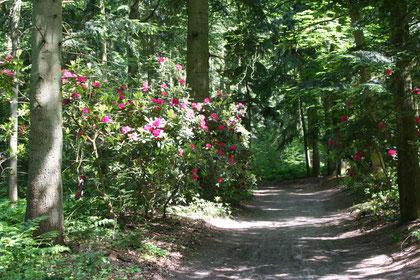 Wanderweg im Berumerfehner Wald