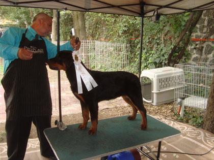 Zves Alpha Canis Rott