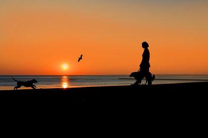 Urlaub mit Hund auf Föhr