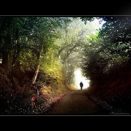 1a passeggiata - Lungo il Sentiero di Umberto Barbera