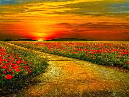 La via della gioia - The path to joy
