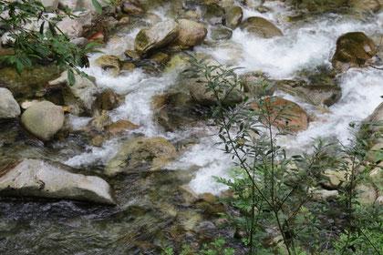 4a Passeggiata - Acqua, pietre, piante.. la Terra che  vive - pensiero di Umberto Barbera