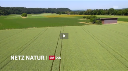Netz Natur Bericht im SRF