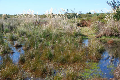 More brackish pools in the Okia Flats Reserve