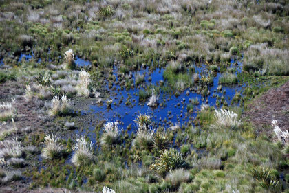 Brackish pools in the Okia Flats Reserve