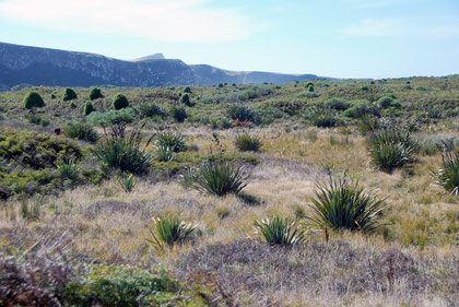 Replanted area in the Okia Flats Reserve