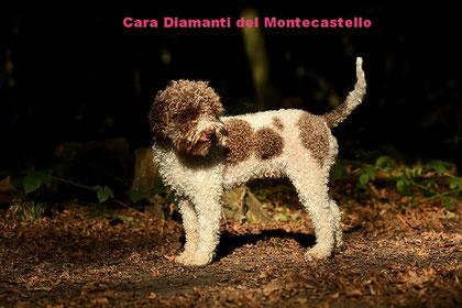Cara Diamanti del Montecastello