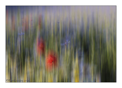 102                    Fragments of Serenity - No. V - Blossom Fields ( Castelluccio, IT)         Ltd edition of 20. Signed