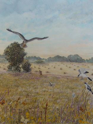 prairie sauvage-50x65