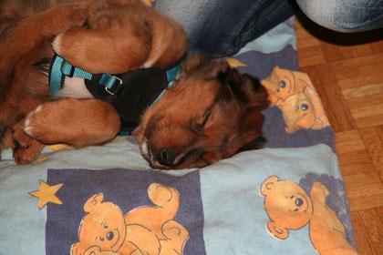 Manapi zieht es vor, weiterzuschlafen.