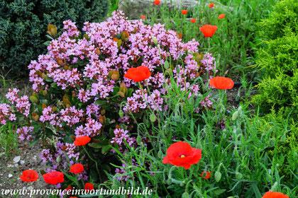 Bild: Frühjahr in Robion